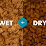 Which Is Best, Wet Or Dry? Pt 1